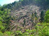 なぎ倒された木々